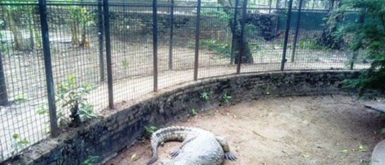 Article : Une photo avec le crocodile ? Non merci